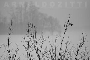 ZAR_08336_WEB