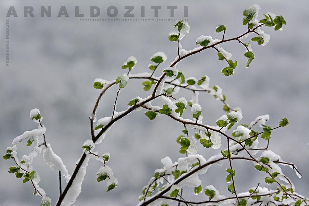 Primavera Insolita