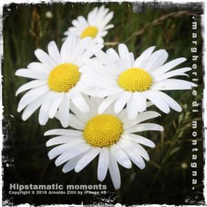 Momenti Hipstamatici