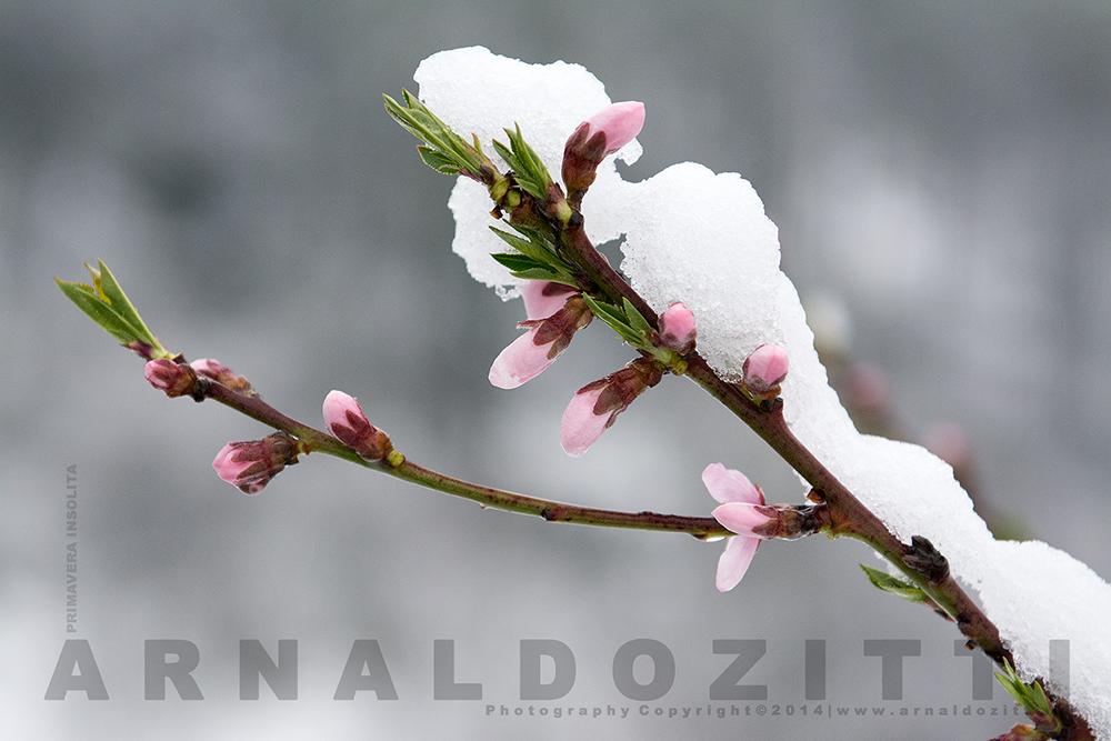 Primavera insolita.